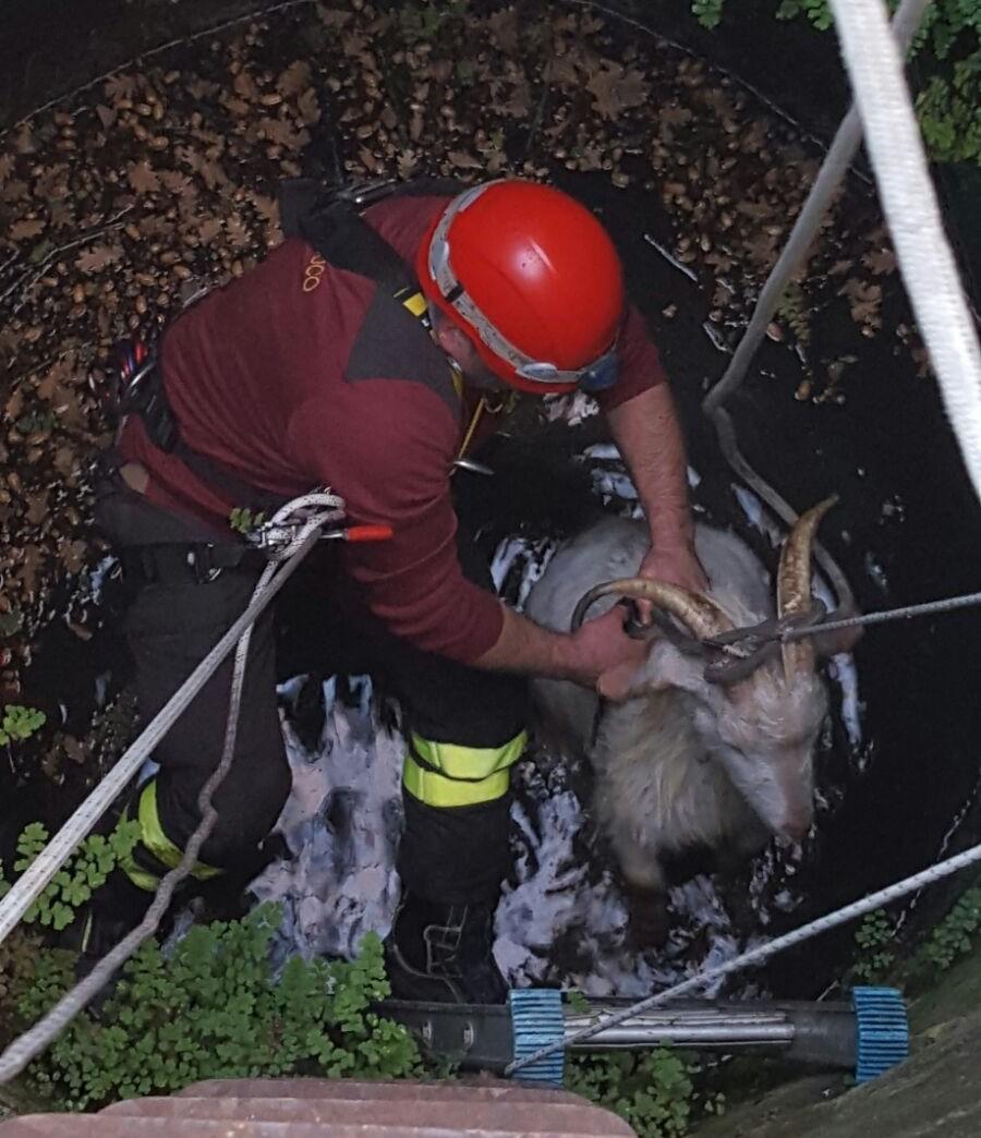 San Leucio del Sannio: vigili del fuoco salvano due capre