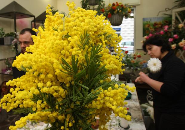Mimose in meno per la festa delle donne