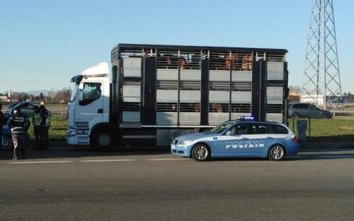 Polstrada: denunce e ispezioni su trasporto animali