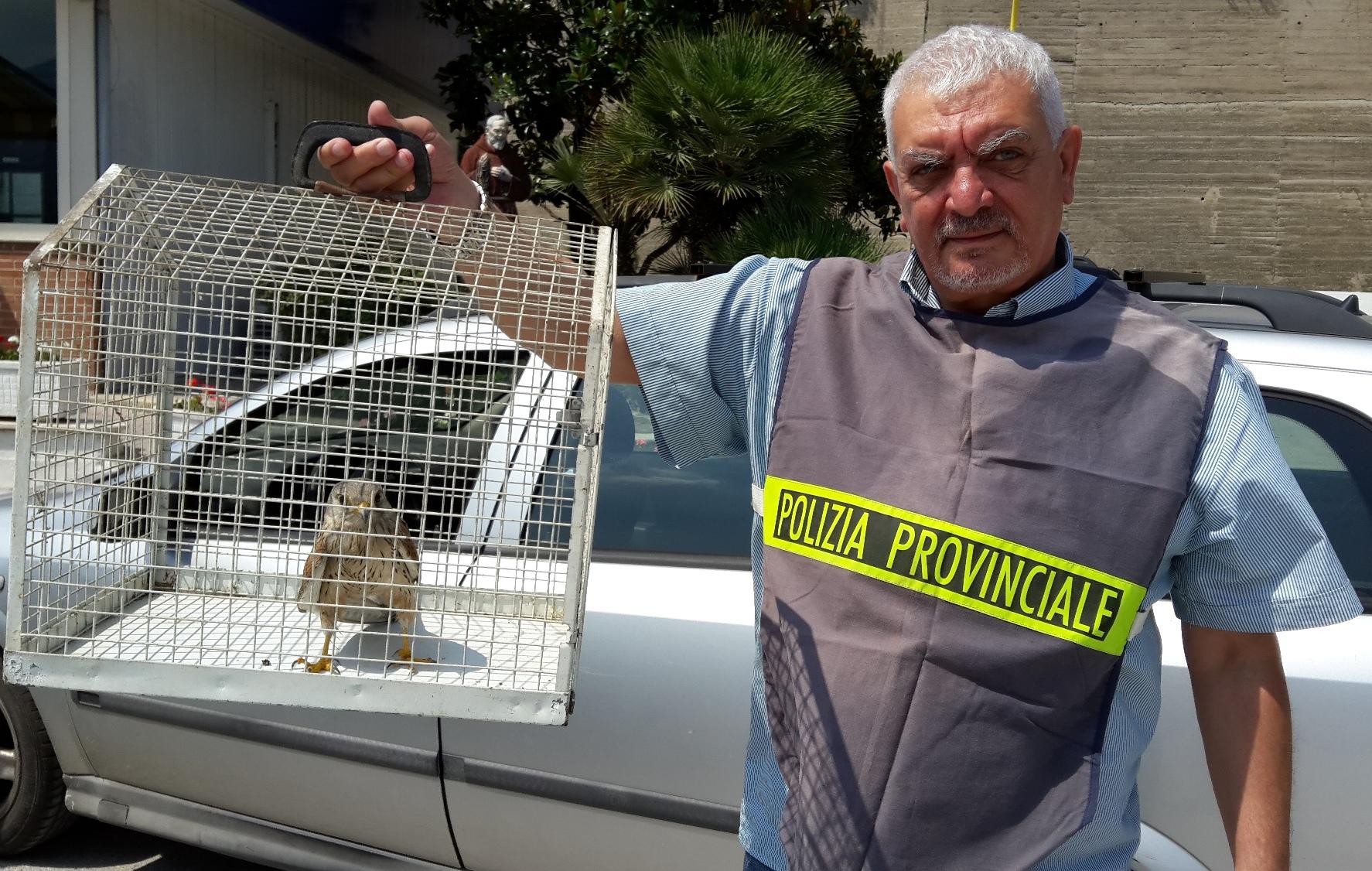 La Polizia Provinciale cessa il servizio di fauna selvatica