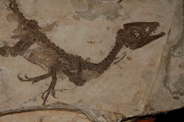 Ubicazione dinosauro Ciro, è polemica politica