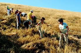 Fine voucher per giovani in agricoltura, l'allarme di Masiello