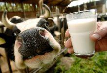 Caldo e afa, l'allerta latte della Coldiretti