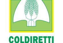 DOP E IGP: Coldiretti Campania prima regione del sud per fatturato