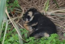Solopaca| La strage dei cani