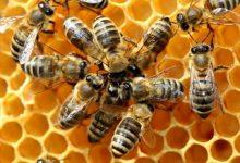 Produzione di miele in calo.Coldiretti: colpa dei cambiamenti climatici