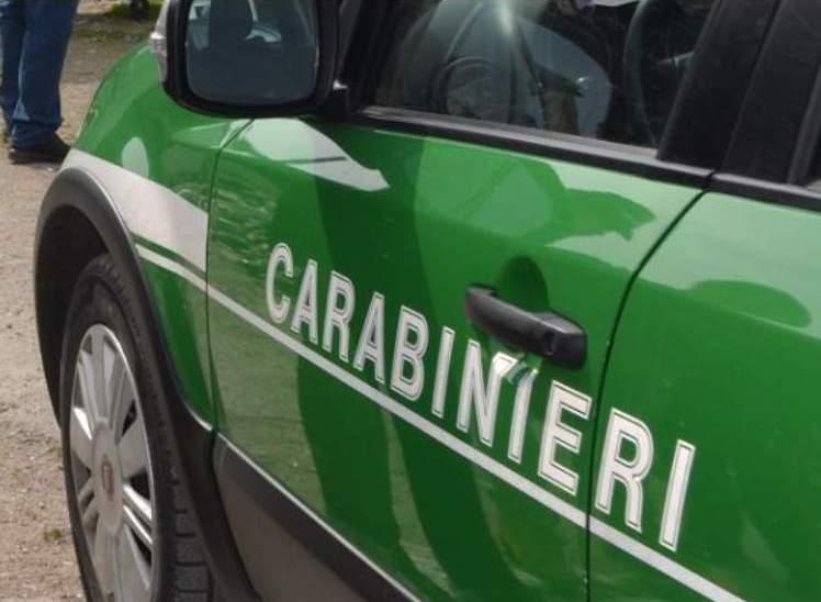 Reati ambientali, controlli serrati in Irpinia: multe e denunce dei carabinieri forestali