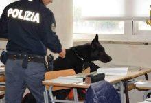 Avellino| Spaccio a scuola, sequestrati 24 grammi di droga