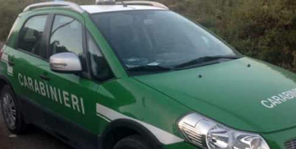 Montella| Gestione illecita dei rifiuti, sanzione di 4mila euro per un'azienda locale