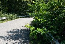 Provincia: risorse straordinarie per verde su strade provinciali