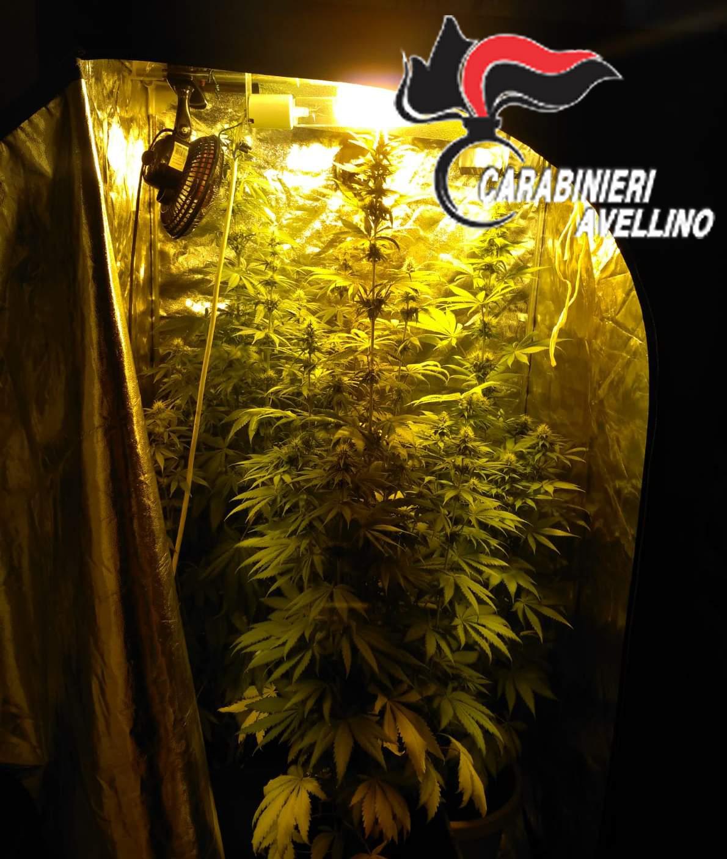 Calitri| Marijuana coltivata in un ripostiglio, nei guai un 20enne