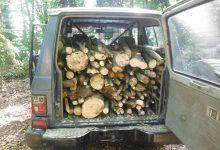 Airola| Ruba legna nel Parco Regionale del Partenio,arrestato pluripregiudicato