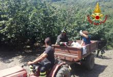 Aiello del sabato| Cade in dirupo mentre lavora nei campi, 56enne salvato dai vigili del fuoco