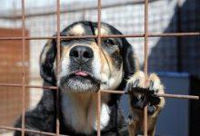 Sinistri stradali causati da cani randagi: paga l'Asl