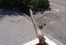 Benevento| Ancora emergenza alberi a Benevento