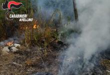 Quindici| Residui vegetali bruciati vicino alle abitazioni, nei guai altre 3 persone