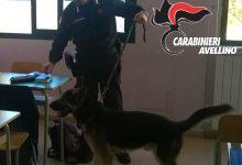 Avellino| Scuole sicure, studente pusher sorpreso con coca e hashish: arrestato