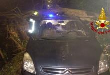 Avellino| Albero su auto in transito, conducente ferito: intervengono i vigili del fuoco