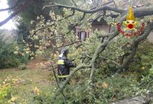 Mercogliano| Maltempo, albero si abbatte su una casa: intervento dei vigili del fuoco