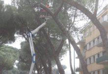 Pini marittimi ed altro: assemblea pubblica del comitato di quartiere Cappuccini/Atlantici/Mellusi