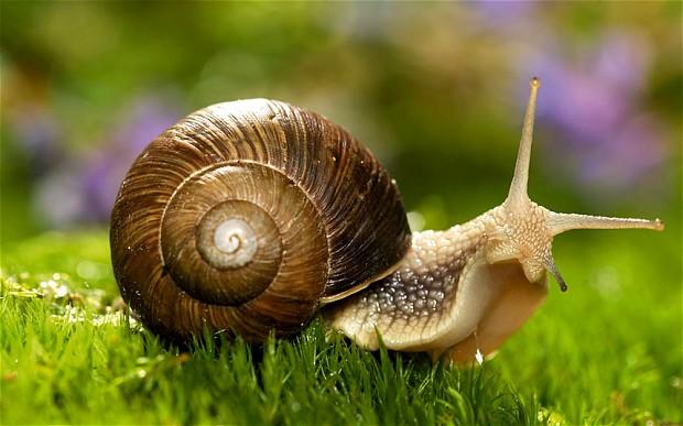 """Oggi si celebra la """"giornata della lentezza"""" quando slow… è veramente good"""