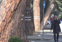 Benevento| Il M5S chiede l'inclusione degli alberi monumentali di Viale degli Atlantici nella lista di tutela
