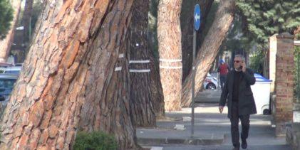 Benevento  Il M5S chiede l'inclusione degli alberi monumentali di Viale degli Atlantici nella lista di tutela