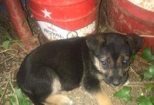 Vacanze estive: SOS cani abbandonati