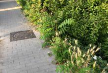 Benevento  Ancora emergenza erba alta e scarsa pulizia dei marciapiedi/FOTO