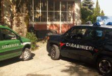 Irpinia| Controlli sul territorio, multe e sequestri dei carabinieri forestali