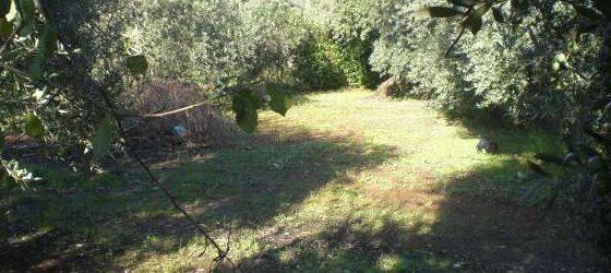 Tragedia a Vitulano, anziano trovato morto in un dirupo