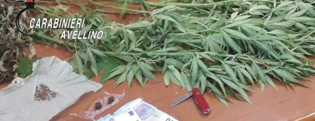 Monteforte Irpino| Canapa indiana coltivata sul balcone, nei guai un 40enne