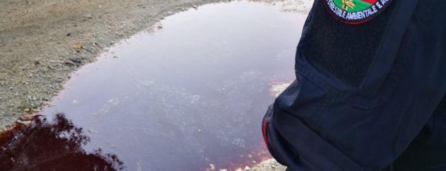 Montesarchio| Sversavano liquami organici di animali nel terreno, sequestrata azienda
