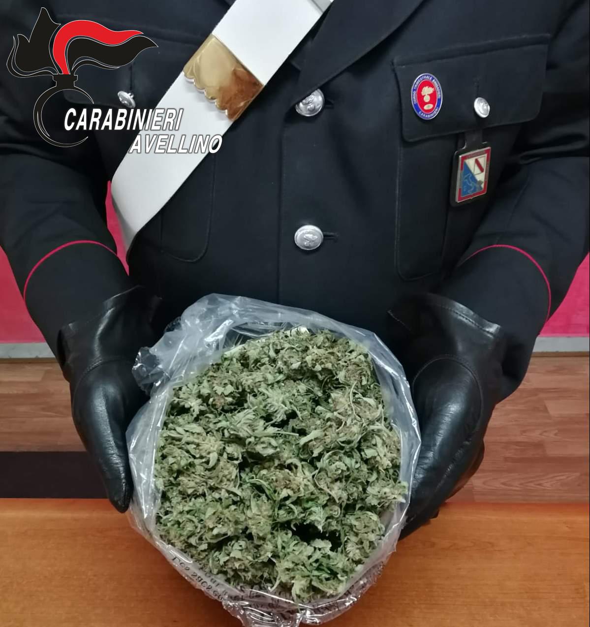 Avella| Mezzo chilo di marijuana, 30enne ai domiciliari per spaccio di droga