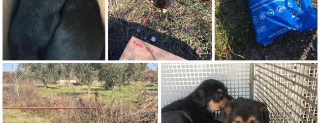 Benevento|Ennesimo abbandono in città: ritrovati otto cagnolini e..un sacco di crocchette