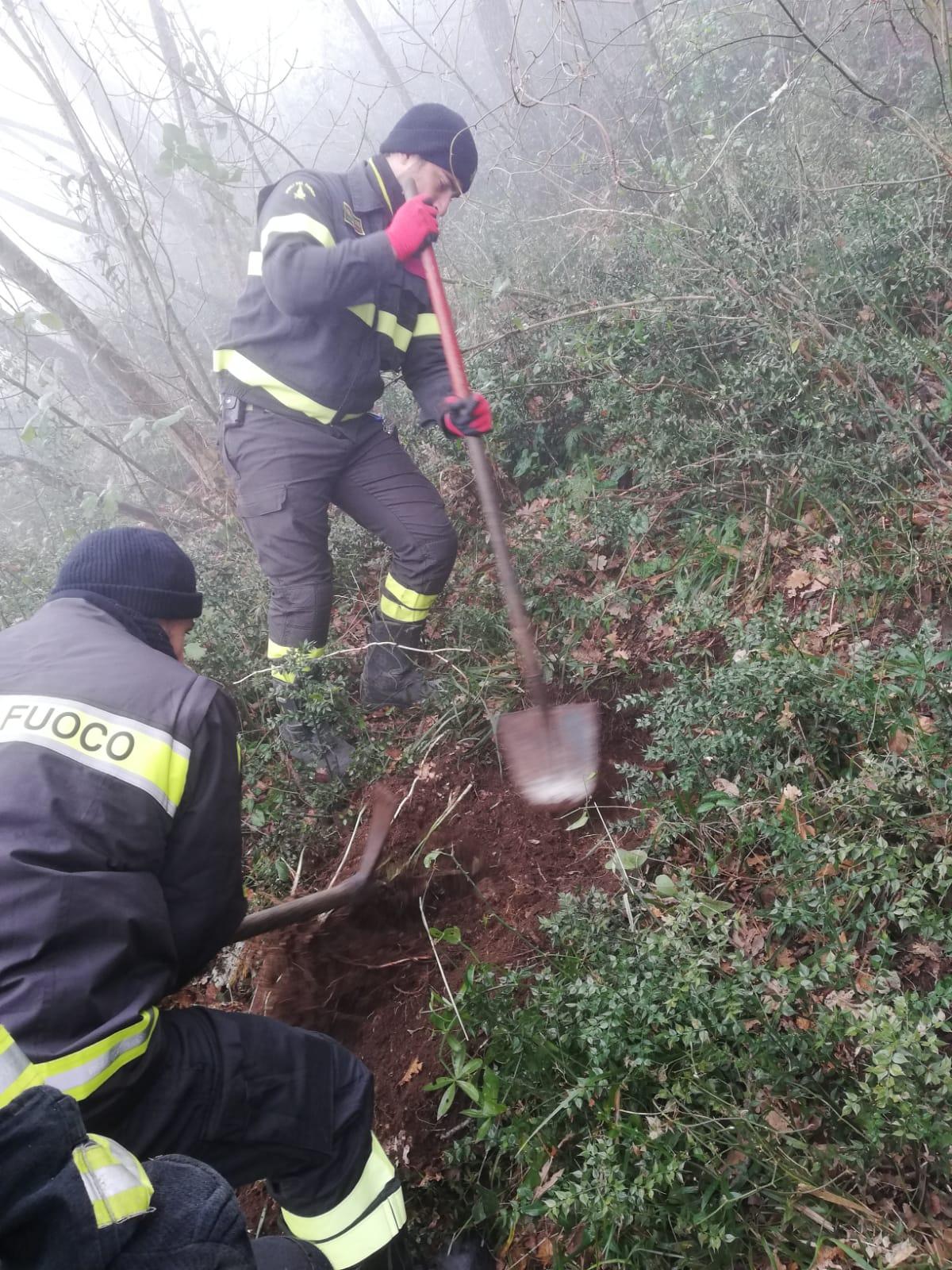Solopaca| Vigili del fuoco mettono in salvo due cagnolini/VIDEO E FOTO