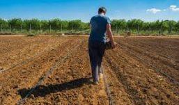 Lavoro, Coldiretti: +12% giovani nei campi, Campania seconda in Italia