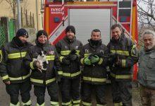 Benevento| Vigili del Fuoco salvano 4 cucciolotte