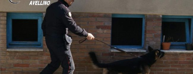 Fontanarosa| Lancia la droga dal balcone ma non sfugge al fiuto di Nino, denunciata pusher 40enne