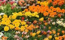 Coronavirus, Coldiretti: via libera a vendita piante e fiori