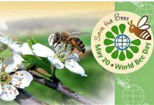 La giornata mondiale delle api: occasione per riflettere sulla salute del nostro pianeta