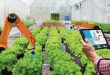 L'innovazione e l'agricoltura da implementare grazie alla cooperazione in tutto il Mediterraneo
