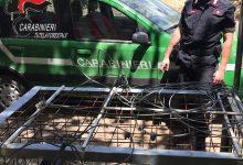 Taurano| Gabbia per la cattura dei cinghiali scoperta nel bosco dalla Forestale