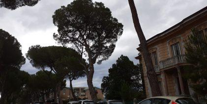 Noi Campani: solo a Benevento l'abbattimento dei pini viene avversata come contrapposizione quasi ideologica