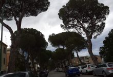 Benevento| Abbattimento pini di Viale degli Atlantici, interviene De Iapinis