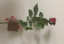 Avellino| Regala rose rosse agli operatori sanitari del Moscati per l'assistenza ricevuta dal padre affetto da covid