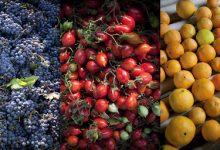 Gli scenari futuri dell'Agrifood Euromediterraneo