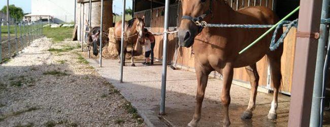 """""""Una giornata in maneggio"""": Un'iniziativa dell'ASD """"Gli Ulivi Ranch"""" di Pago Veiano"""