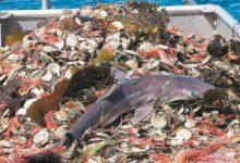 La ricerca scientifica e l'innovazione tecnologica per il futuro della pesca nel Mediterraneo