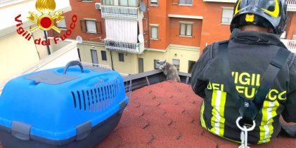 Avellino| Gatto sul tetto in bilico su una grondaia, lo salvano i vigili del fuoco